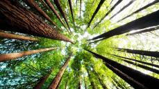 Anlam Arayışında Doğadan İlham Alarak İçinizdeki Tohumu Keşfedin